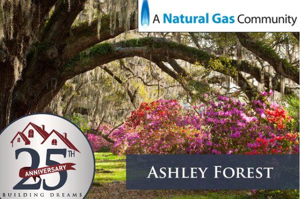 Ashley Forest